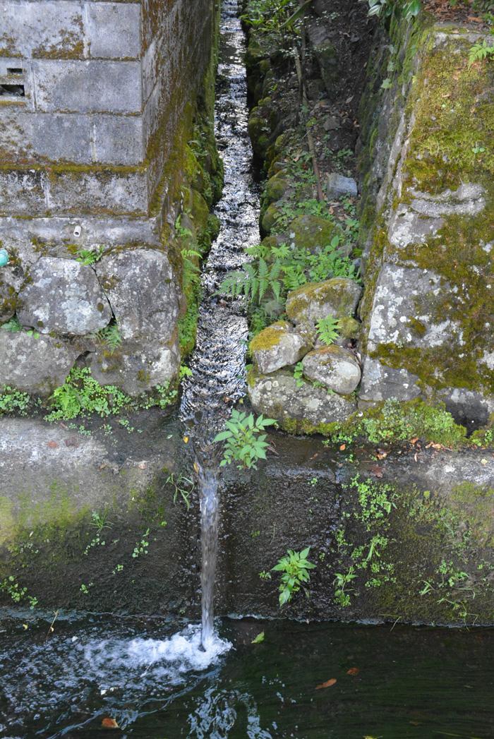 湧き水の流れも小川に合流します。
