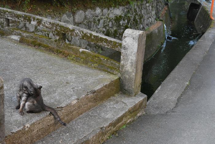 石橋には猫も。。。